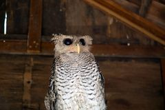 Cute owl. Royalty Free Stock Photos