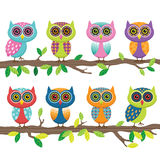 Cute Owl Collection Stock Image