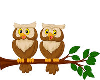 Cute owl couple cartoon Stock Image