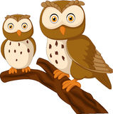 Cute owl couple cartoon Royalty Free Stock Image