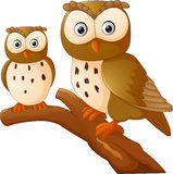 Cute owl couple cartoon Stock Photography