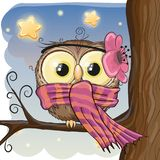 Cute Owl on a brunch Stock Photos