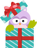 Cute Owl in Gift Box Stock Images