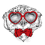 Cute owl with glasses Heart. Valentine`s Day. Stock Photo