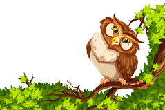 Cute owl on green branch. Illustration Stock Images