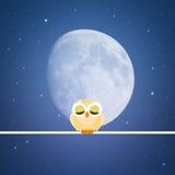 Cute owl in the night Stock Photo