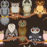 Cute owl seamless pattern. Cartoon style bird Royalty Free Stock Images