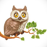 Cute owl sitting on a branch Royalty Free Stock Photography