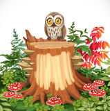 Cute owl sitting on stump surrounded by toadstools Royalty Free Stock Images