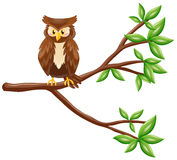Cute owl standing on branch. Illustration Royalty Free Stock Image