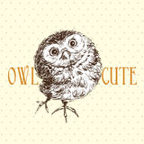 Cute owl standing and looking Stock Images