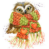 Cute owl T-shirt graphics, snowy owl illustration with splash wa Royalty Free Stock Image