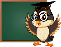 Cute owl teacher Stock Image