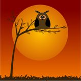 Cute owl on the tree Royalty Free Stock Photo