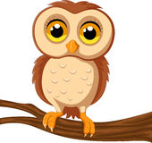 Cute owl on a tree branch. Illustration of Cute owl on a tree branch Stock Photography