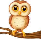 Cute owl on a tree branch. Illustration of Cute owl on a tree branch Royalty Free Stock Photos