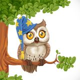 Cute owl wearing a hat sitting on a tree branch Stock Photo