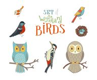 Vector set of woodland birds in cartoon style. royalty free illustration