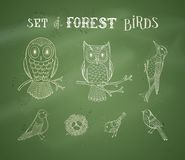 Vector chalk set of forest birds on blackboard background. Royalty Free Stock Photos