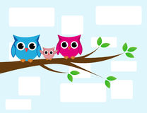Cute owls couple with baby owl Stock Images