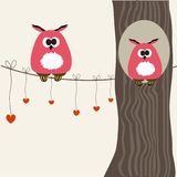 Cute owls couple in love Royalty Free Stock Photos