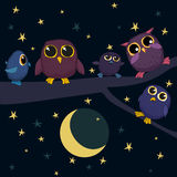 Cute owls are sitting on the branch at night Stock Images