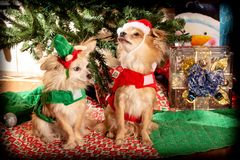Doggy Christmas party stock photography