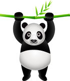 Cute panda Stock Photography