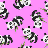Cute panda with bamboo Stock Photography