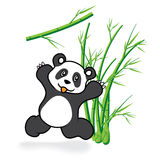 Cute Panda Bear in Bamboo Forrest 05 Stock Photo