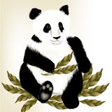 Cute panda bear on a white background Royalty Free Stock Photography