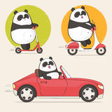 Cute panda character riding scooter and driving car Royalty Free Stock Images