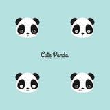 Cute panda faces Stock Photo
