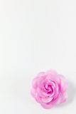 Cute paper rose Stock Image