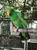 A cute Parrot bird. A cute Psittacines or Parrot bird Royalty Free Stock Images