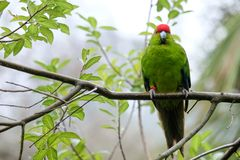 Parrot perches on a tree branch royalty free stock image