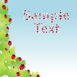 Cute party invitation card with ladybirds vector Stock Photos