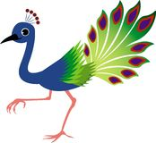 Cute peacock Stock Photo