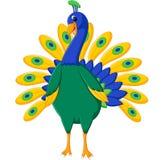 Cute peacock Stock Photography
