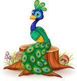 Cute peacock on tree stump Stock Image