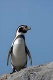 Cute penguin royalty free stock photo