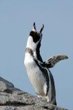 Cute penguin stock image