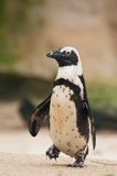 image photo : Cute penguin