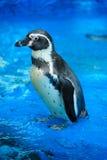 Cute penguin Royalty Free Stock Photos