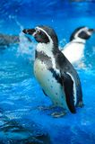 Cute penguin Royalty Free Stock Photography