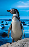 Cute penguin Stock Images