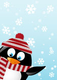Cute penguin Christmas card Stock Photos