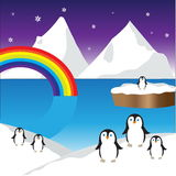 Cute penguins Stock Images