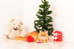 Cute persian cat and christmas tree Stock Photos