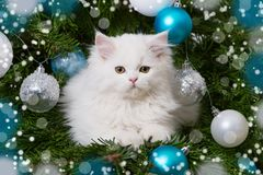 Cute persian kitten lying in a christmas tree Royalty Free Stock Photos